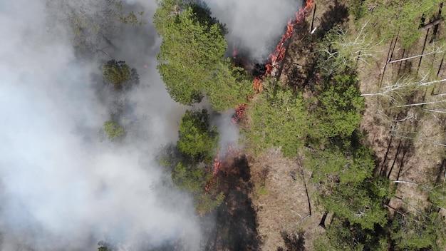 Zamknij widok pożaru, rozprzestrzeniania płomieni pożaru lasu. klęska żywiołowa, zmiana klimatu, globalne odrobaczanie. ogień, pożar, płonąca trawa w dymie i płomieniach. koncepcja ziemi