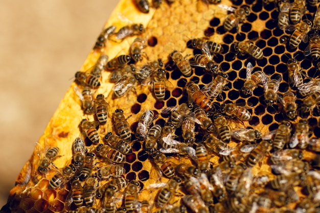 Zamknij widok pszczół pracujących na komórkach miodu