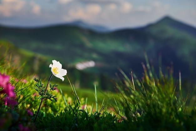 Zamknij widok trawy w górach w słoneczny dzień.