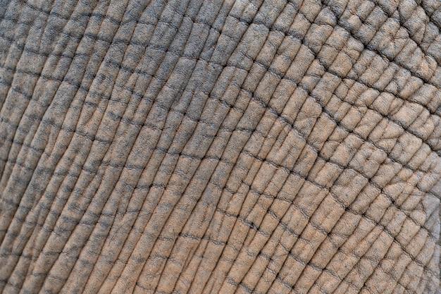 Zamyka skóra słoń słoń