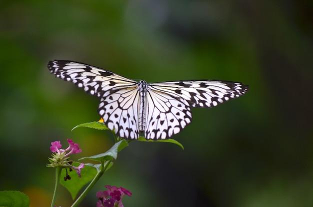 Zamyka strzał białego motyla obsiadanie na roślinie z zamazanym
