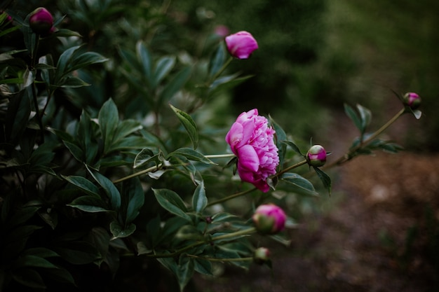 Zamyka strzał różowi kwiaty z zamazany naturalnym