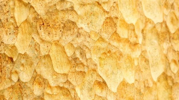 Zamyka up barkentyna lagerstroemia floribunda drzewo dla tła.