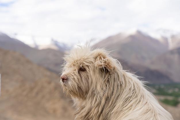 Zamyka up bezdomny pies w północy india