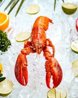 Zamyka up czerwony homar umieszczający na lodzie otaczającym z owocowymi plasterkami
