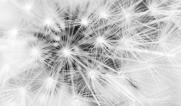 Zamyka up dandelion ziarna, wireframe lekkiej struktury podłączeniowy pojęcie.