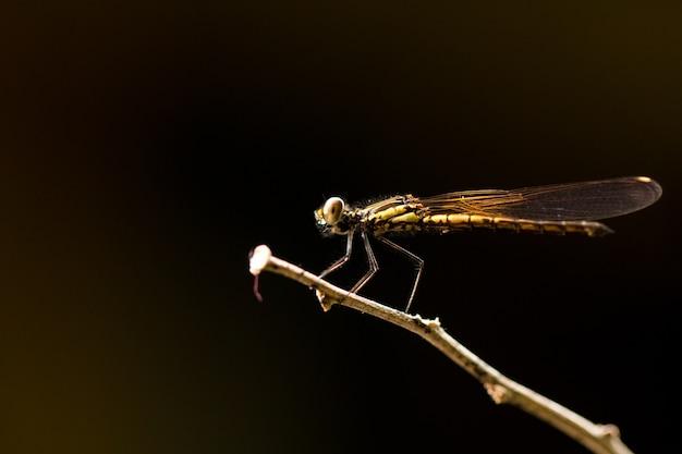 Zamyka up mały piękny dragonfly