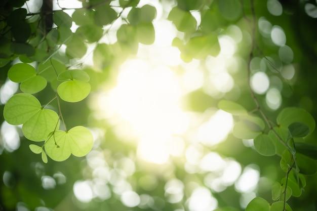 Zamyka up natura widoku zieleni storczykowego drzewa liść na zamazanym zieleni tle