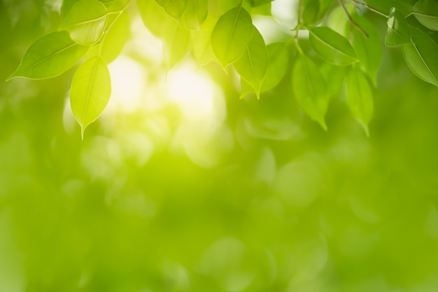 Zamyka up piękny natura widoku zieleni liść na zamazanym zieleni tle pod światłem słonecznym z bokeh