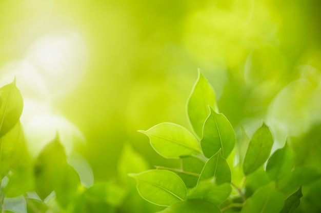 Zamyka up piękny natura widoku zieleni liść na zamazanym zieleni tle pod światłem słonecznym