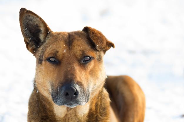 Zamyka up pies w śniegu