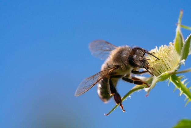 Zamyka up pszczoła na żółtym kwiacie