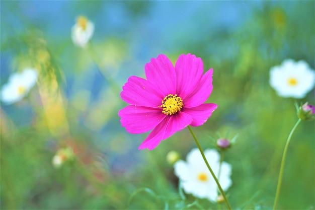 Zamyka up, purpura kwiat z zielonym backgound