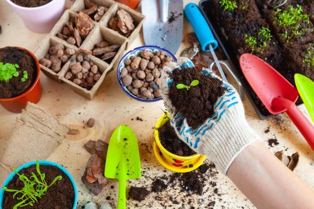 Zamyka up ręki przeszczepia rośliny w nowego garnek