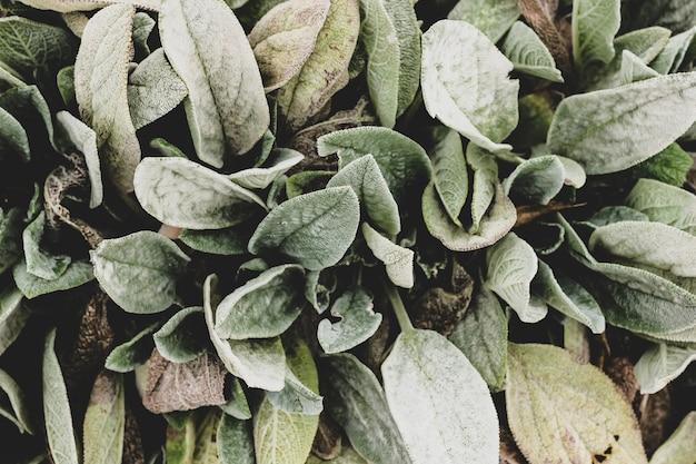 Zamyka up roślina z dużymi zielonymi kostrzewiastymi liśćmi