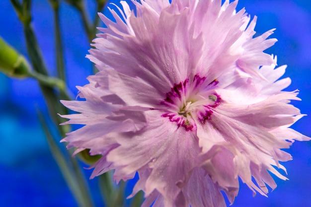 Zamyka up różowy kwiat. fotografia makro. naturalny.