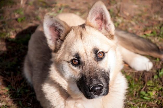 Zamyka up śliczny pies kłaść na gras i patrzeje kamerę podczas jesień dnia