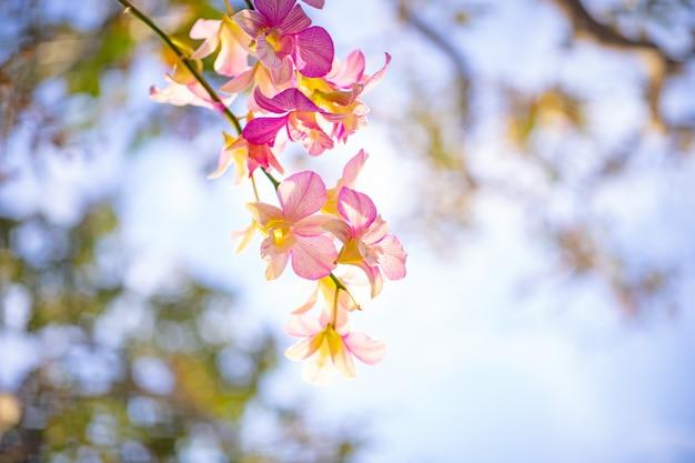 Zamyka up storczykowy kwiat