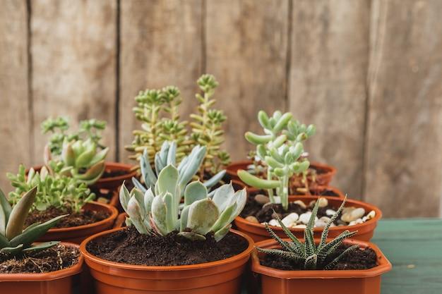 Zamyka up sukulent domu rośliny kolekcja na drewnianym stole