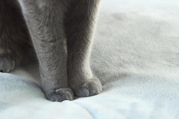 Zamyka up szare kot łapy. wyszczególnia strzał miękkie kot łapy.