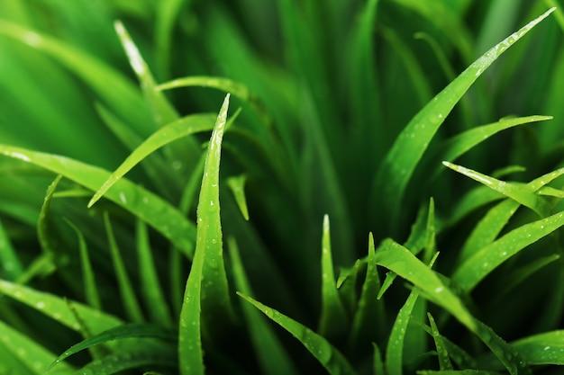 Zamyka up zielona trawa