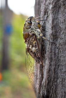 Zamyka w górę cykada kija na drzewie w lesie