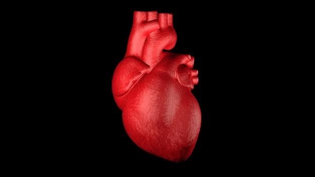 Zamyka w górę czerwonego ludzkiego serca 3d odpłaca się