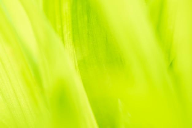 Zamyka w górę liścia zielonego koloru i zamazanego greenery tła w naturze zielonego liścia świeży pojęcie