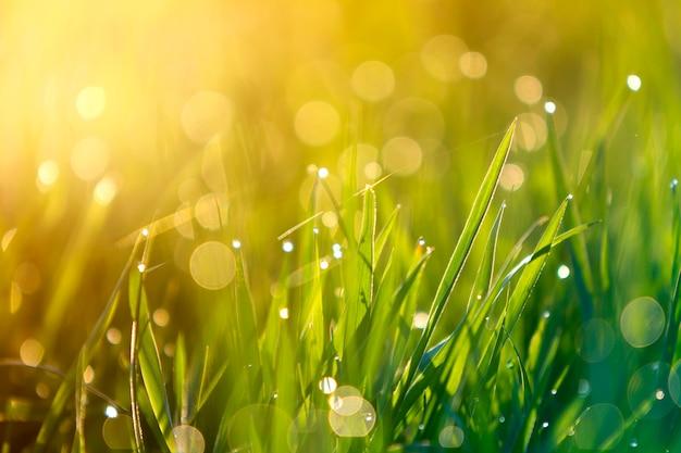 Zamyka w górę makro- abstrakcjonistycznego obrazka zaświecający słońce jaskrawymi świeżymi czystymi jasnozielonymi traw ostrzami r na zamazanym bokeh tle na pogodnej wiośnie lub letnim dniu. piękno koncepcji środowiska naturalnego.