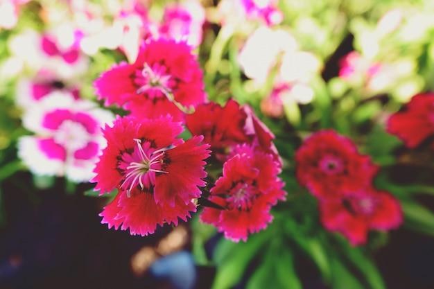 Zamyka w górę małych kwiatów w ogrodowej tło teksturze