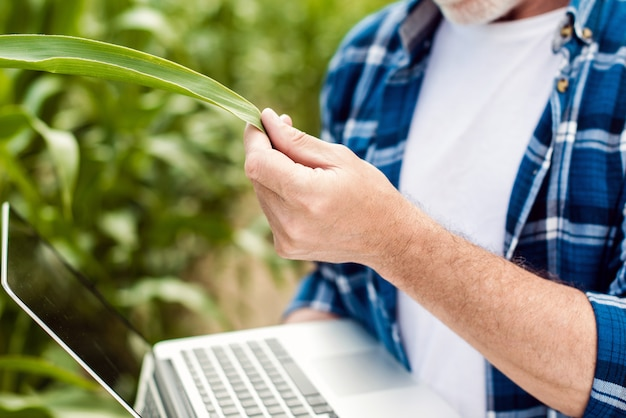 Zamyka w górę męskiej ręki dotyka liść. starszy rolnik trzyma laptop w kukurydzanym polu