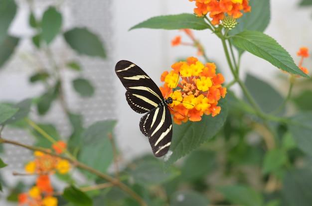 Zamyka w górę motyla w zamazanym tle
