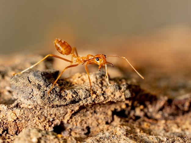 Zamyka w górę mrówki na drzewie