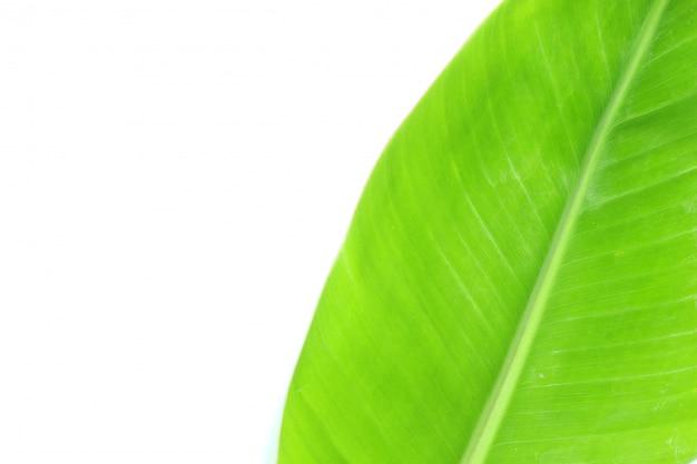 Zamyka w górę odgórnego widoku bananowego liścia odizolowywającego na bielu