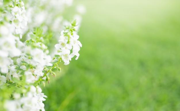 Zamyka w górę pięknego białego kwiatu na greenery trawy tle w ogródzie