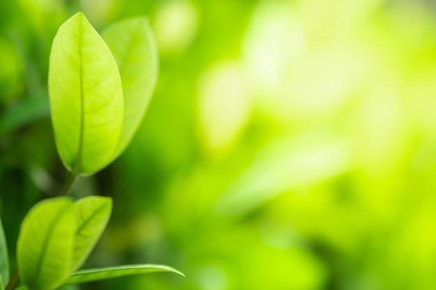 Zamyka w górę pięknego widoku natury zieleni liście na zamazanym zieleni drzewie z światłem słonecznym w jawnym ogrodowym parku.