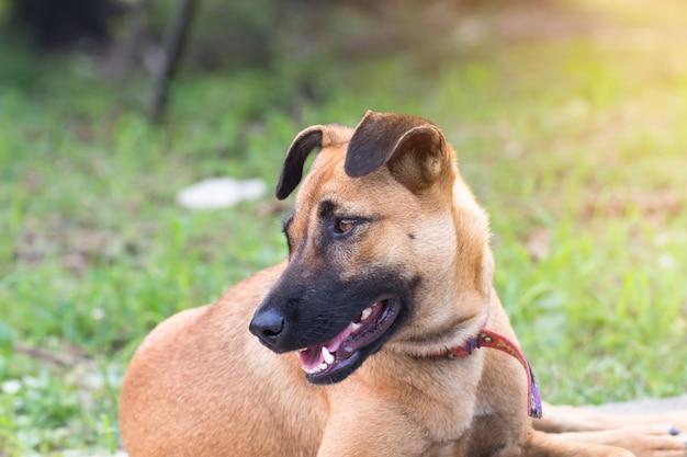 Zamyka w górę portreta przybłąkany pies na bocznym spacerze, vagrant pies