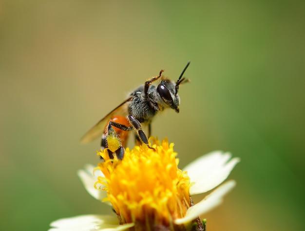 Zamyka w górę pszczół na kwiacie