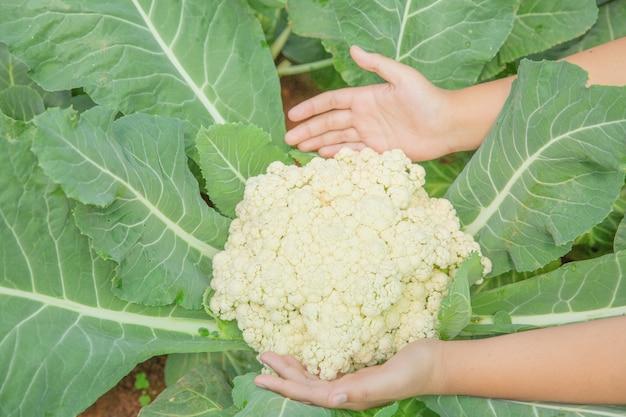 Zamyka w górę ręka rolnika w ogródzie podczas ranku czasu jedzenia tła