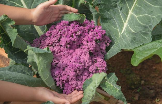 Zamyka w górę ręka rolnika w ogródzie podczas ranku czasu