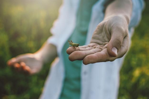 Zamyka w górę ręki chłopiec trzyma pasikonika w jego ręce przy zmierzch łąką, wiejska scena