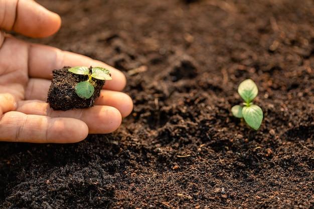 Zamyka w górę ręki mienia potomstw zielonego drzewa flancy i flancowania w ziemi