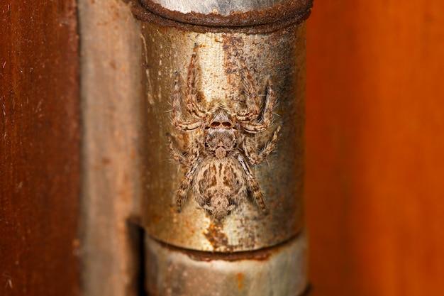 Zamyka w górę skoku pająka na stalowym drzwi w domu