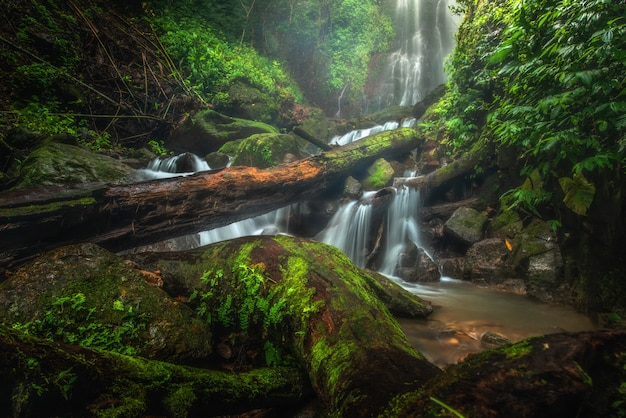 Zamyka w górę widok siklawy w głębokim lesie przy parkiem narodowym, siklawy rzeki scena.