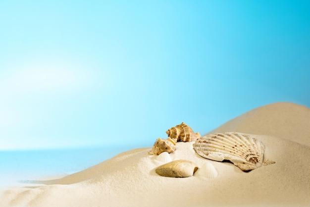 Zamyka w górę widoku skorupy na piaskowatej plaży