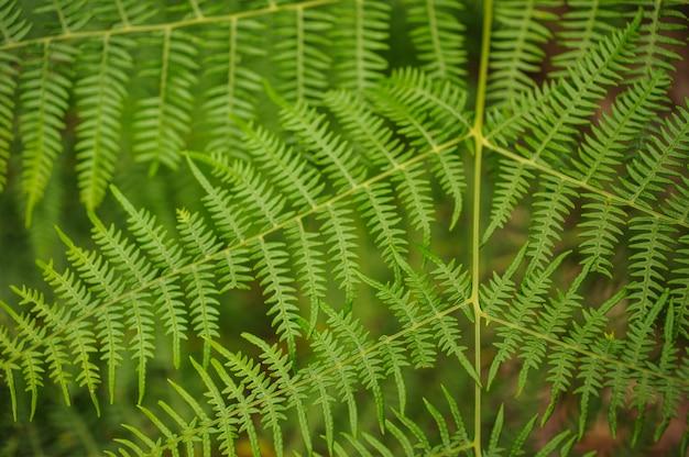 Zamyka w górę widoku zielona gałąź w lesie