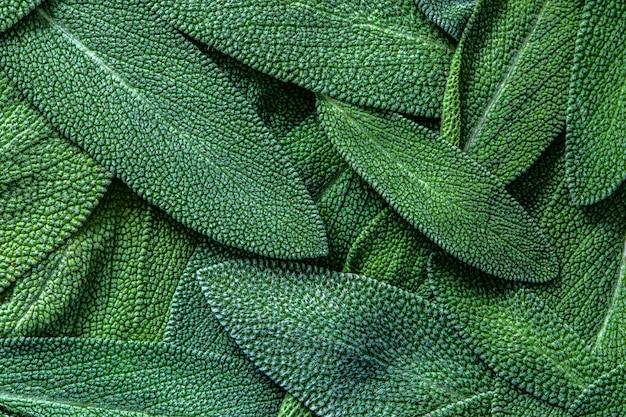 Zamyka w górę zielarskiej mędrzec liść abstrakta tekstury