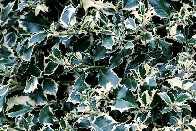 Zamyka w górę zielonego i żółtego liścia ogródu tła.