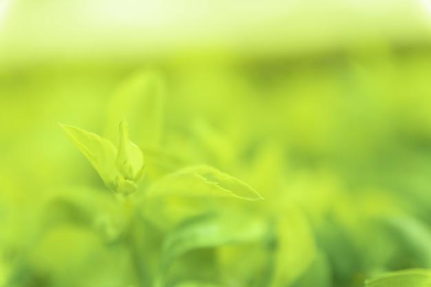 Zamyka w górę zielonych liści widok tekstury zieleni natury zamazany tło w parku, ogródzie lub lesie. służy do pisania lub kopiowania w pustej przestrzeni na zielonym tle przyrody.