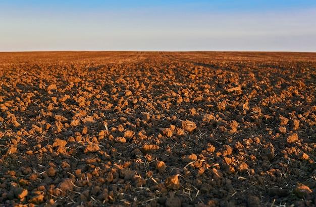 Zaorane pole w porannym zbliżeniu światła, horyzont zamazany